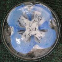 St Clair powder box lid